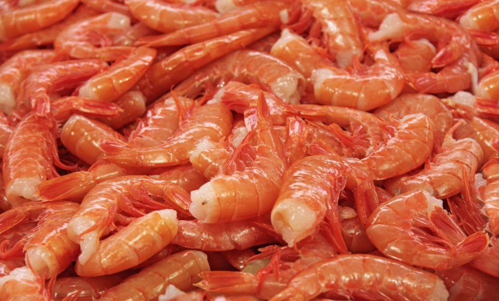 royal_red_shrimp